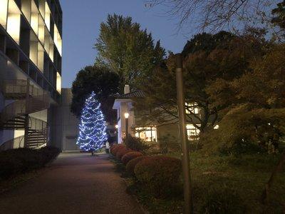 キリスト教センター前のクリスマスツリー