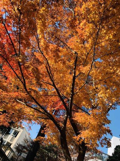 東女キャンパスの綺麗な紅葉