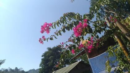 タイ花.jpg